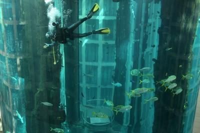 AquaDom — крупнейший цилиндрический аквариум в мире.